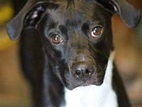 BABS (6001)'s story MEET BABS! A 2 year old, female,