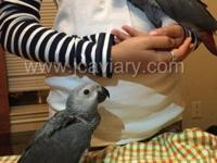 Location: Austin, TX We have 2 baby African Grey