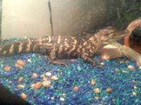 Comes with a 55 gal tank,lid, rocks, fake plants, a