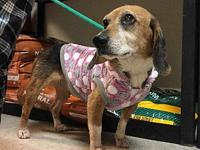 Baby's story Baby is a female beagle mix and estimated