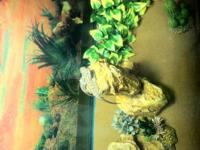 I have 30 baby bearded dragons that are ready to go to