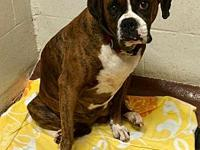 Baby's story   Baby is about 4-5 yo female boxer