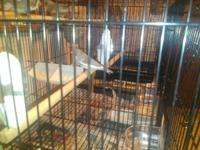 I have 2 baby Zebra Finches born December 28th and