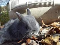 I have lots of baby bunnies available. They are about 7