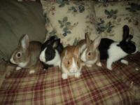 Dwarfs Hi The bunnies are still available. They are