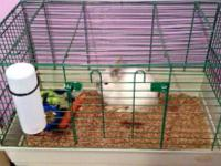 Male Longhiar baby bunny still looking for home. Will