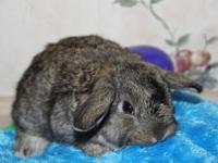 We have lots of bunnies- Depending on breed prices are