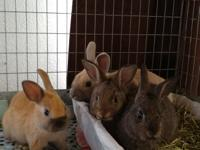 Rescued baby bunnies available on foster-to-adopt