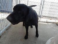 Baby Cakes's story Super friendly girl. She will play