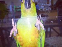 Sweet and stunning conures available for $299, located