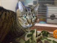 Baby is friendly, affectionate, and laid back. She
