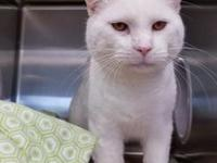 Baby's story Baby is a male approx year old white cat