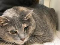 Baby's story Baby is a shy older gal that loves