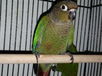 I have 4 baby green cheek conures ready for a new home
