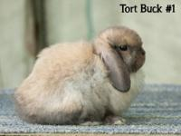 I will have 4 baby Holland Lops available July 3rd,