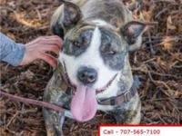 This animal is available at: Sonoma County Animal