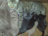 my cat, Lilly had kittens 2 black, 1 orange and white