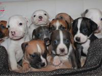 Meet Baby Litter there are 5 boys and 5 girls. These