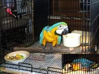 We are specialized in the breeding of birds/parrots and