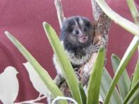 We need a new home for the baby Marmoset monkeys. They