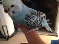 I have two 5 week old parakeets needing homes. They