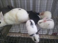Cute baby rabbits ready for there new homes in good