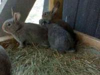 baby rabbits just in time for easter  Location: