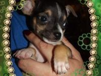 have 1 male puppy left out of a litter of 3 for