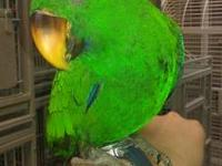 My name is Kelsie and I have several Eclectus Babies to