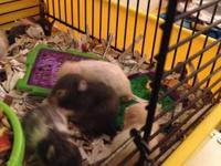 I have 9 baby hamsters that need a new home! Great gift