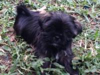 Hi this is Woody and he is 12weeks old, very small,