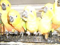 we have a large selection of baby birds at very