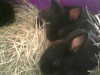 Super friendly baby bunnies 1 female ( doe) 4 males (