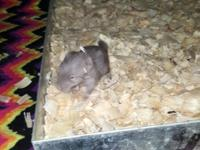 I have 2 baby chinchillas that will be ready for their