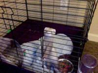 2-3 month old baby ferret, female. Spayed and