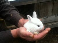 "Pet Rabbit Ridge is a licensed ""Pet Rabbit Breeding"