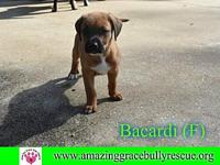 Bacardi's story You can fill out an adoption