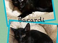 My story Meet Barcardi. He is a short haired black