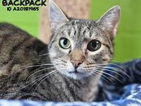 Backpack's story Backpack is a 1 year old female cat