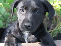 Bagel is about 8-9 weeks old. She is sweet, playful and