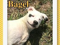 Bagel's story Bagel's bio coming soon! All of our pets