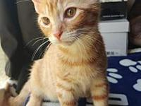 Bagel/MB's story Bagel is a curious, affectionate, 4