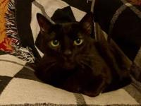 My story Hi - My name is Bagheera and I am a new member
