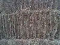 Clean, fertilized Bahia hay for sale. $7.00 per bale -