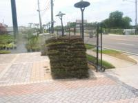FRESH CUT DROUGHT TOLERENT BAHIA SOD $70.00 PALLET COME