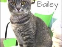 Bailey's story Bailey was rescued from a feral cat