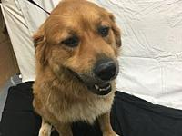 Bailey's story Bailey's $160. Adoption Fee is quite