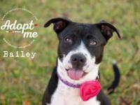 Houston, TX area: Bailey is in a kennel, waiting for a
