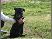 STRAY HOLD IN THE CITY POUND; 1804022 - Bailey - approx