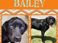 Bailey's story Bailey came from Big Spring Texas